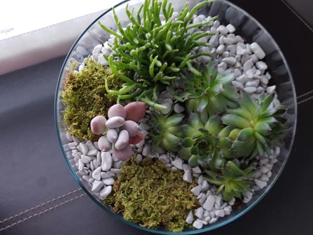decoration florale terrarium fleuriste woippy effleurs