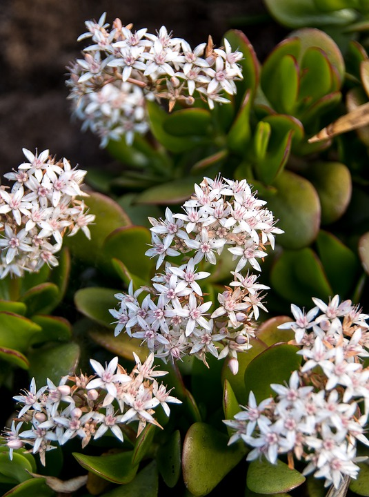 plantes fleuriste woippy