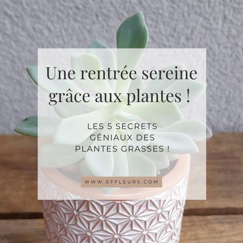 plante planteverte fleuristemetz fleuristewoippy