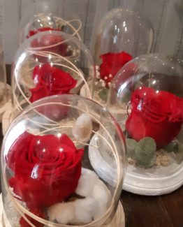 Rose éternelle St Valentin - Effleurs